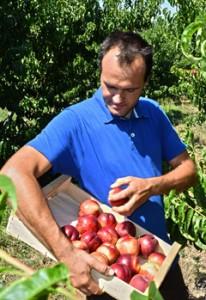 Roland Galerne - fruits et légumes
