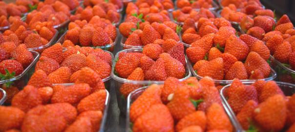 Les fraises sont arivées